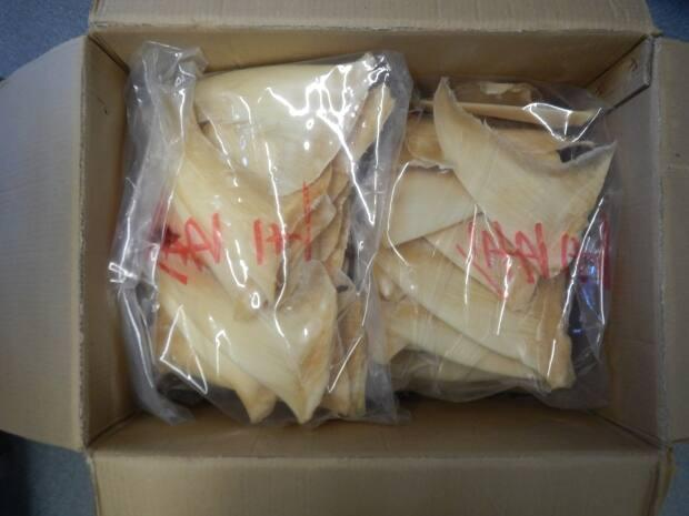 A box of dried silky shark fins is pictured after being seized from a Vancouver-based company, Kiu Yick Trading Co. Ltd., in February 2018.