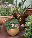 """<p>To create contrast and visual vibrancy, situate curvaceous containers on stairs and fill them with interestingly shaped plants, like scallop-leafed geraniums or spiky, serrated agave.</p><p><a href=""""https://www.goodhousekeeping.com/home/gardening/advice/g2258/perfect-potted-plants/"""" rel=""""nofollow noopener"""" target=""""_blank"""" data-ylk=""""slk:RELATED: 16 Easy Container Gardening Ideas for Your Potted Plants"""" class=""""link rapid-noclick-resp""""><strong>RELATED:</strong> 16 Easy Container Gardening Ideas for Your Potted Plants</a></p>"""