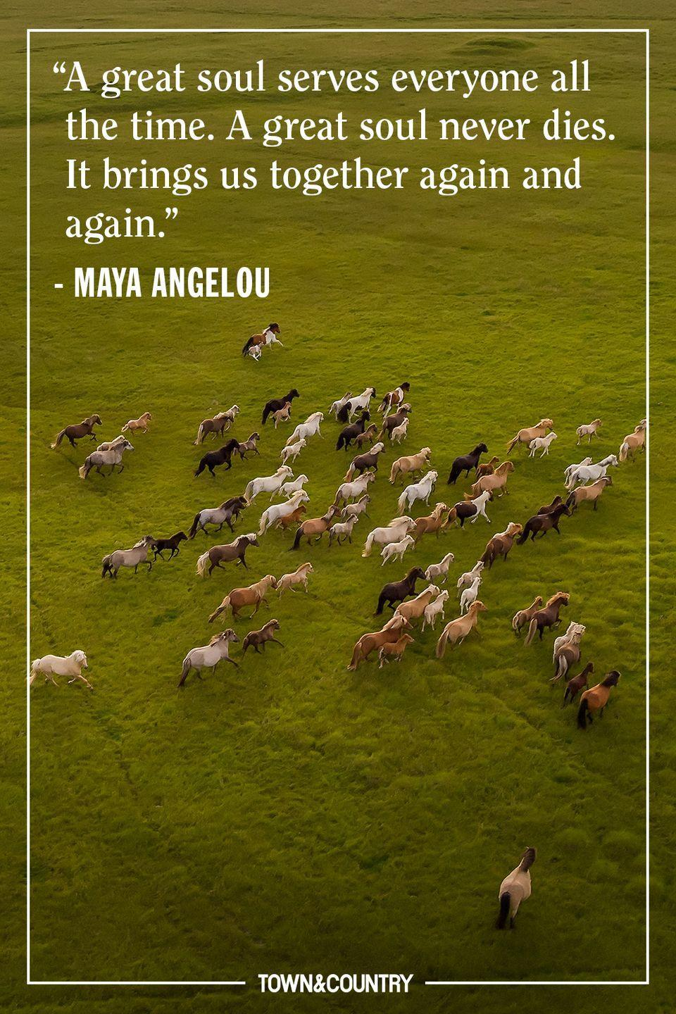 """<p>""""A great soul serves everyone all the time. A great soul never dies. It brings us together again and again."""" </p><p>– Maya Angelou </p>"""