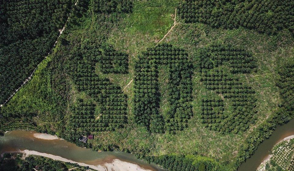 A giant SOS carved into an oil palm plantation in Sumatra by Lithuanian artist Ernest Zacharevic to draw attention to the damage caused by deforestation. Photo: Ernest Zacharevic