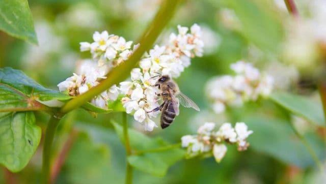 In Bhutan, erratic rainfall and changing weather patterns lead to a decline in the bee population