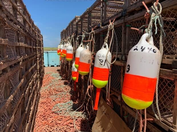 The Assembly of Nova Scotia Mi'kmaw Chiefs says DFO seized 37 lobster traps last Friday that were part of Potlotek's moderate livelihood fishery.   (Travis Kingdon/CBC - image credit)