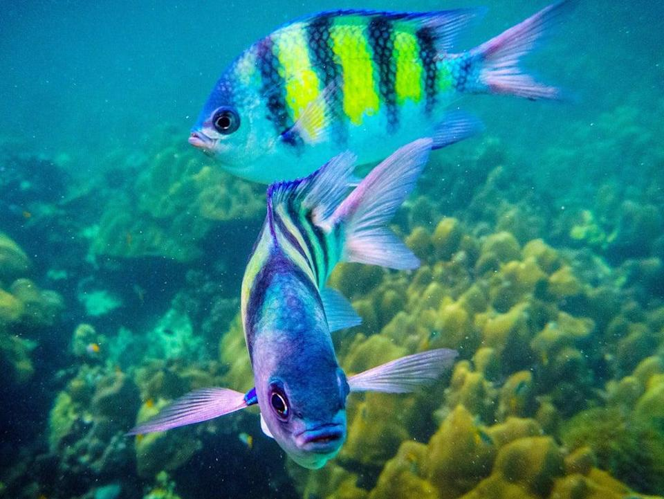 Fish may choke on or be poisoned by toxic particles  (AFP via Getty Images)