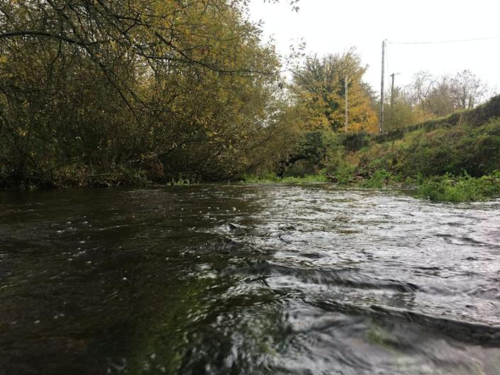"""<span class=""""caption""""><em>Gammarus duebeni</em> lives in freshwater in Ireland, like this stream in County Cork.</span> <span class=""""attribution""""><span class=""""source"""">Alicia Mateos Cardenas</span>, <span class=""""license"""">Author provided</span></span>"""