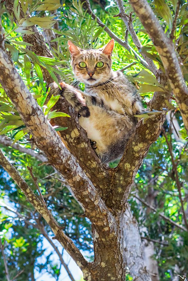 <p>A kitty looks suprised to have its picture taken while chilling in a tree at the Lanai Cat Sanctuary in Hawaii. (Photo: Andrew Marttila/Caters News) </p>