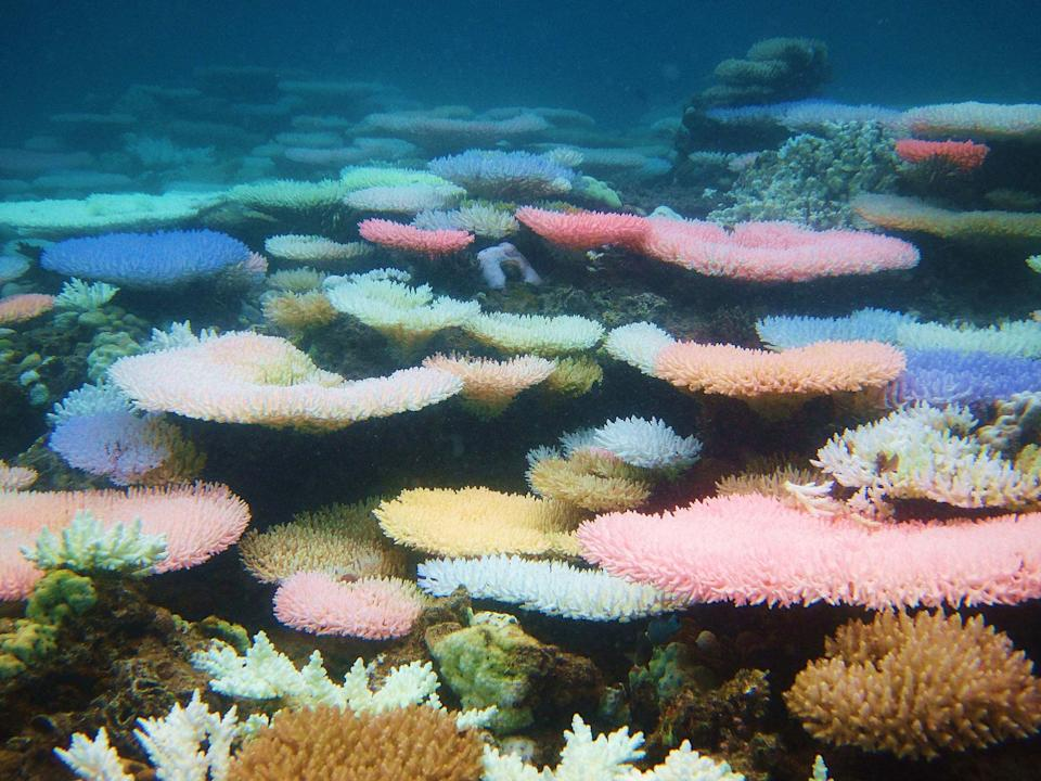 Corals during a colourful bleaching event in the Philippines in 2010 (Ryan Goehrung/University of Washington/PA Wire): Ryan Goehrung/University of Washington/PA Wire
