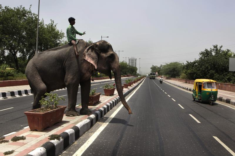 A mahout crosses a street with his elephant in New Delhi, India, Tuesday, May 24, 2011. Representatives of eight countries where elephants roam freely are meeting to secure a future for the animal increasingly under threat. Mining and land development are threatening elephants' habitats as does ivory poaching, resulting in increased conflict between humans and the beasts. (AP Photo/Manish Swarup)