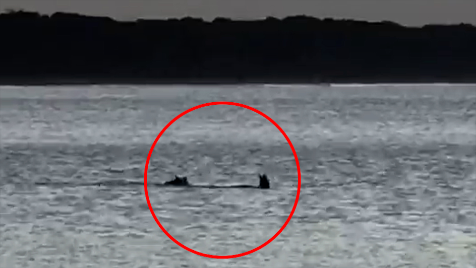 A red circle highlights a dog and kangaroo in the ocean in the distance.