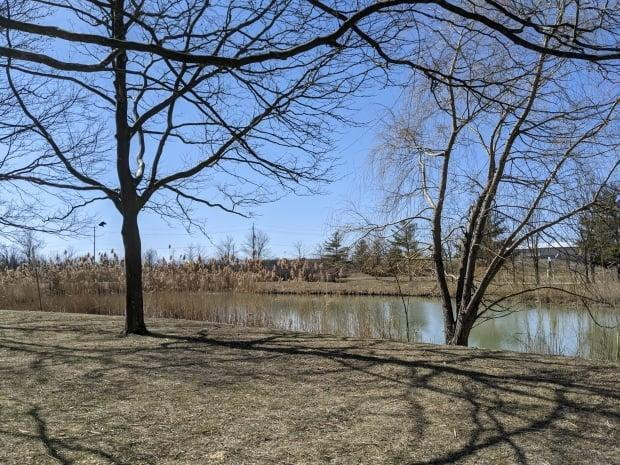 John's Pond in Little River Corridor is shown in a photo taken on March 21, 2021. (Kerri Breen/CBC - image credit)