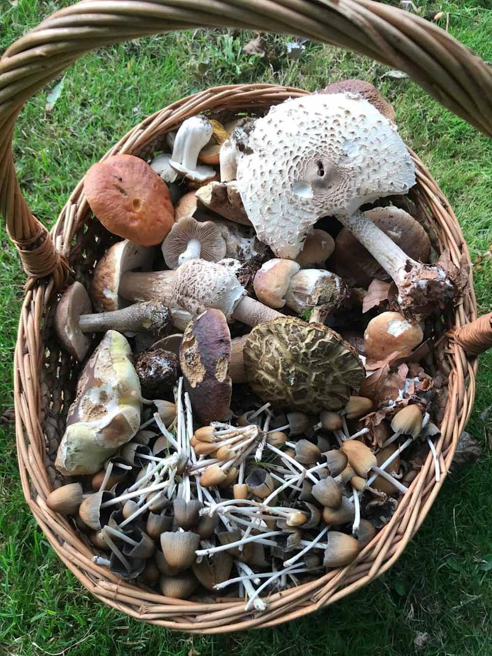 Emily says she no longer buys mushrooms anymore (Collect/PA Real Life).