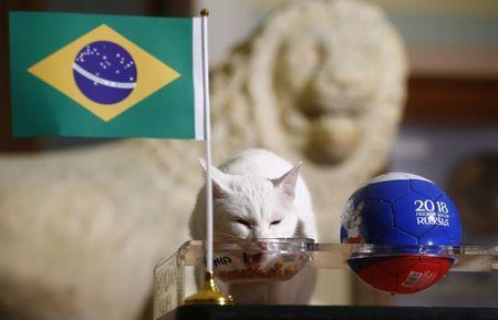 Achilles the cat, one of the State Hermitage Museum mice hunters, attempts to predict the result of the 2018 FIFA World Cup match between Brazil and Costa Rica during an event in Saint Petersburg, Russia June 22, 2018. REUTERS/Anton Vaganov