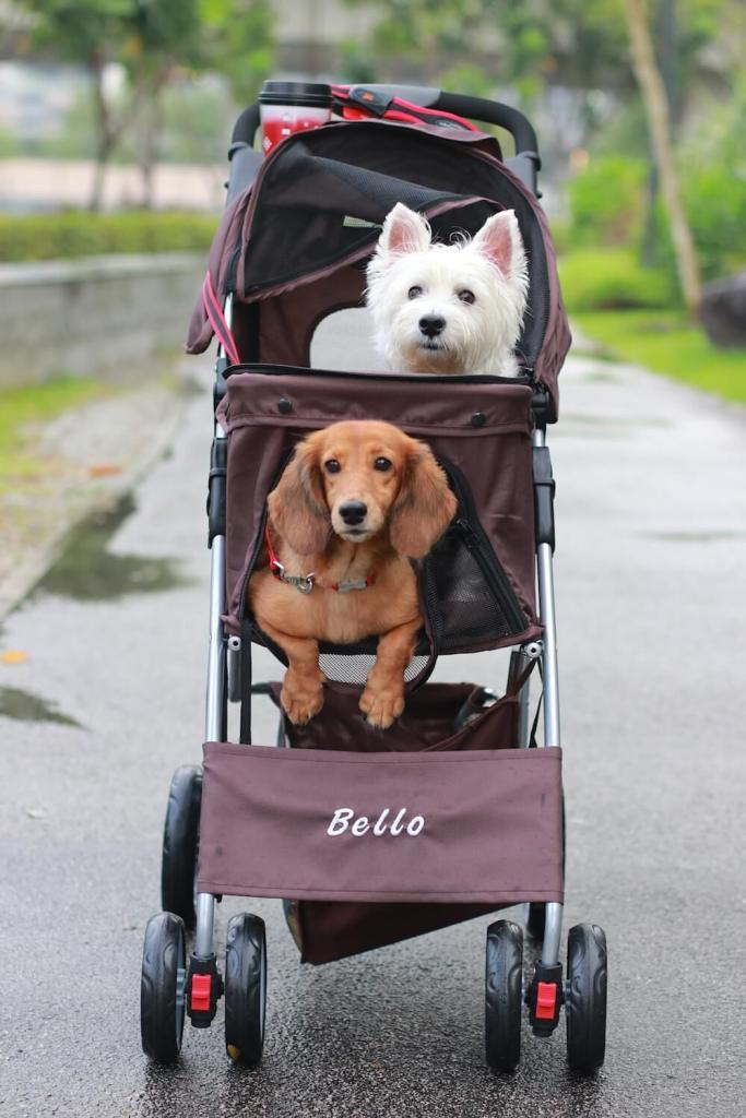 Bello Pet Stroller from Taobao Review | Vanillapup