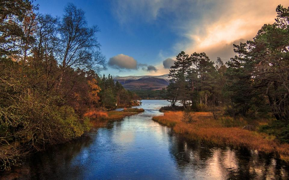 Glenmore Forest, Cairngorms National Park - Getty