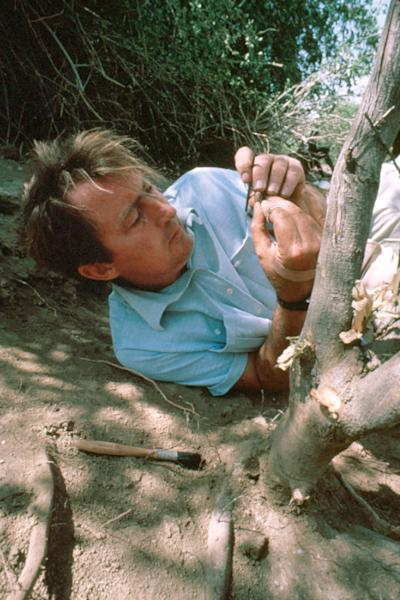 """In this 1972 photo provided by the Turkana Basin Institute, paleoanthropologist Richard Leakey recovers skull fragments of a Homo habilis specimen not far from the present site of the Turkana Basin Institute's Ileret research facility in northern Kenya. Leakey predicts skepticism over evolution will soon be history sometime in the next 15 to 30 years. """"If you get to the stage where you can persuade people on the evidence, that it's solid, that we are all African, that color is superficial, that stages of development of culture are all interactive,"""" Leakey says, """"then I think we have a chance of a world that will respond better to global challenges."""" (AP Photo/Turkana Basin Institute, Bob Campbell)"""
