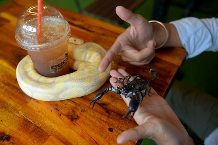 As customers sip on their lattes and hang out with the reptiles, Chea Raty says he hopes they will come to 'love them like I do'