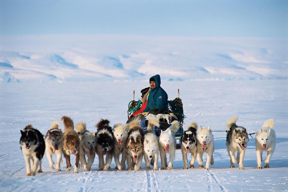 An Inuit hunter and his dogsled team - getty