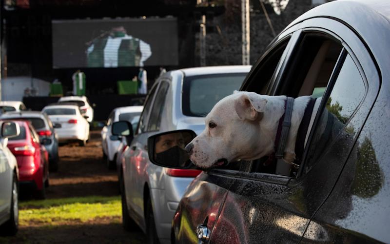 A dog peaks out of the window of a vehicle, as parishioners attend a Sunday Mass - they can listen to the Mass from the safety of their own car by just tuning to FM 88.1 on their radios - AP Photo/Marco Ugarte