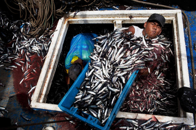 "<p>Marvin Vega unloads a crate of anchovies from the holding area of a ""boliche,"" the Peruvian term for boats that are used by fishermen who fish with nets, at the port of El Callao, Peruon on Dec. 7, 2012. (Photo: Rodrigo Abd/AP) </p>"