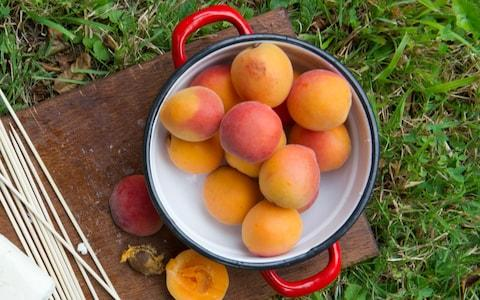 Ripe apricots  - Credit: Christopher Jones