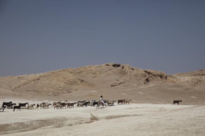 """In this Monday, June 29, 2020 photo, a shepherd tends to his flock of sheep in the Jordan Valley, West Bank. The U.N.'s human rights chief Michelle Bachelet said that Israel's plan to begin annexing parts of the occupied West Bank would have """"disastrous"""" consequences for the region, issuing her dire warning as senior U.S. and Israeli officials were meeting in Jerusalem trying to finalize the move. (AP Photo/Sebastian Scheiner)"""