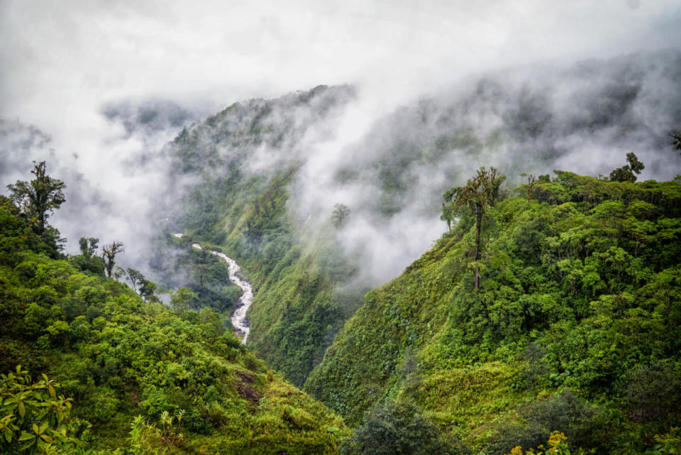 Expanding forests may cool the planet more than previously thought, study says