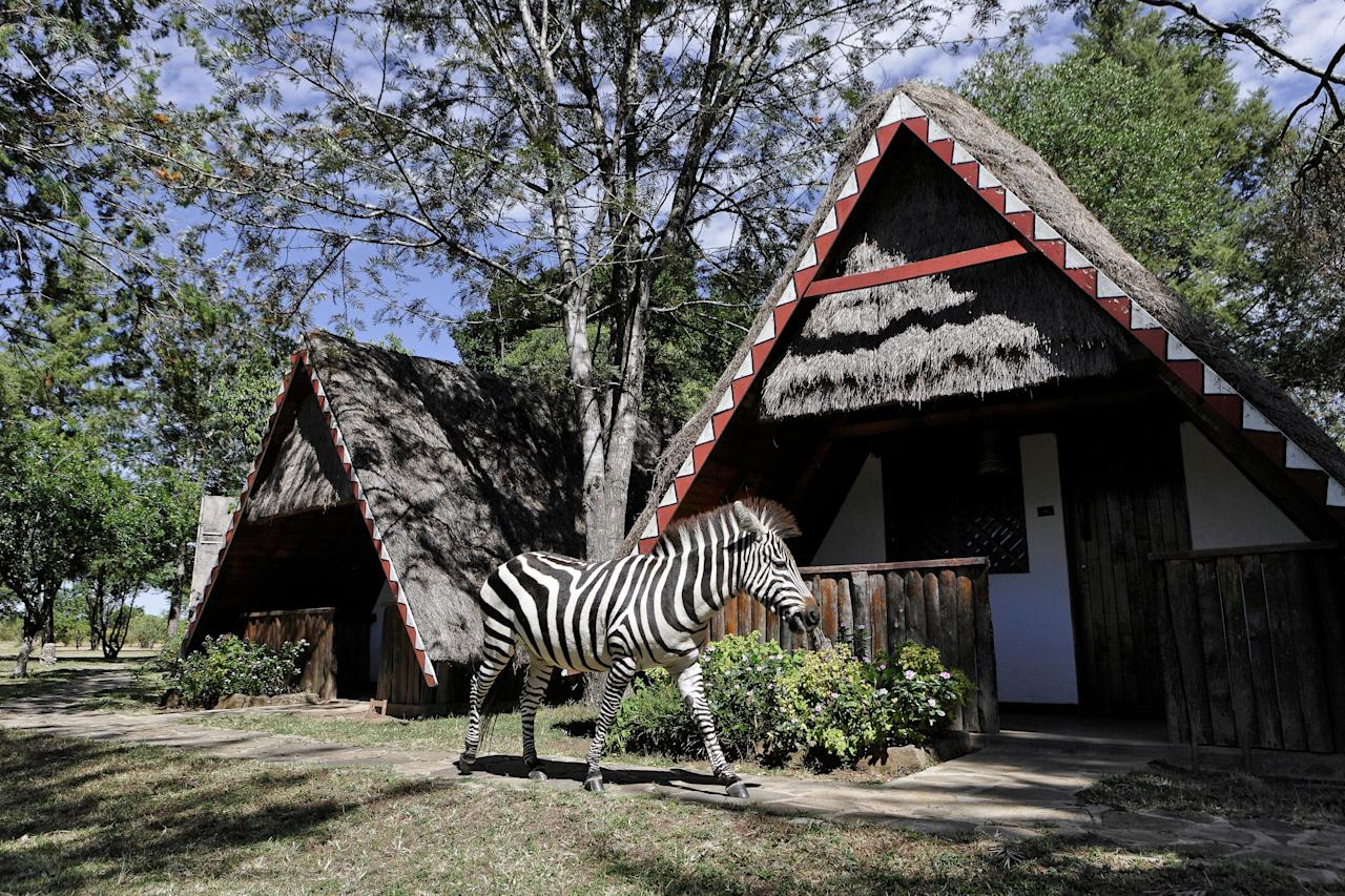 """Even though it's an hour away from Kenya's famous Maasai Mara National Reserve, <a rel=""""nofollow"""" href=""""https://www.maasaimara.com/entries/mara-buffalo-camp"""">there is no shortage of wildlife here</a>. People often spot zebras grazing right outside of their rooms."""