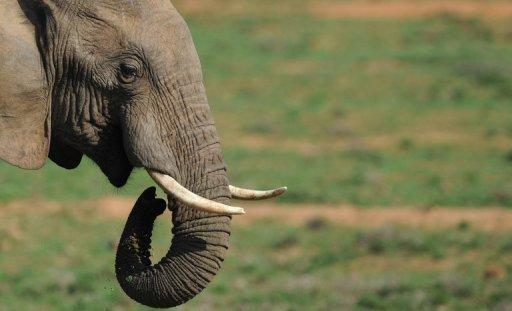 The country boasts large numbers of big game like elephant, lion and buffalo