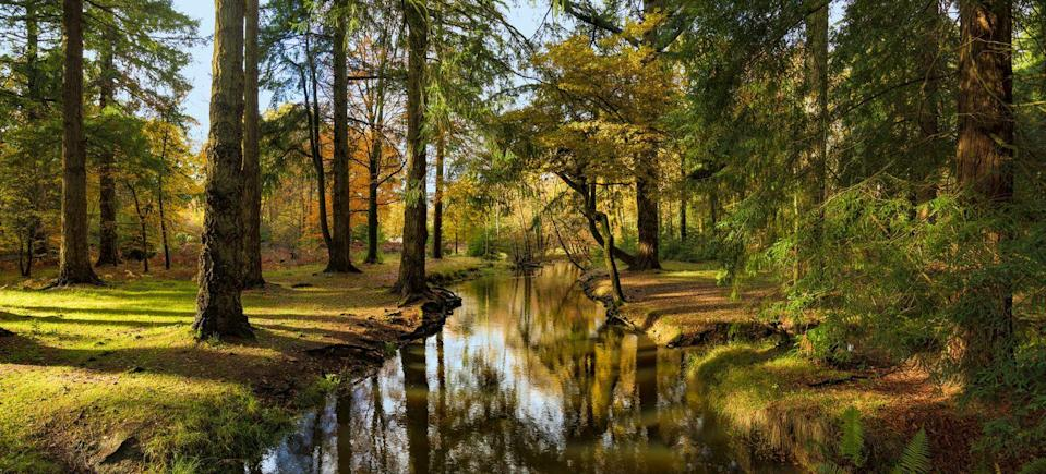 """<p>Over in Hampshire, the New Forest is one of the best spots to visit the blazing colours of autumn. We're certain you'll fall in love with the cliff top walks, idyllic glades, ancient woodland and open moors. Pack a picnic and make it a day trip to remember. </p><p><a class=""""link rapid-noclick-resp"""" href=""""https://www.thenewforest.co.uk/"""" rel=""""nofollow noopener"""" target=""""_blank"""" data-ylk=""""slk:BOOK VISIT"""">BOOK VISIT</a> </p>"""