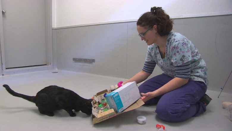 Don't touch that cat: Humane Society program focuses on felines' minds, not their cuddles
