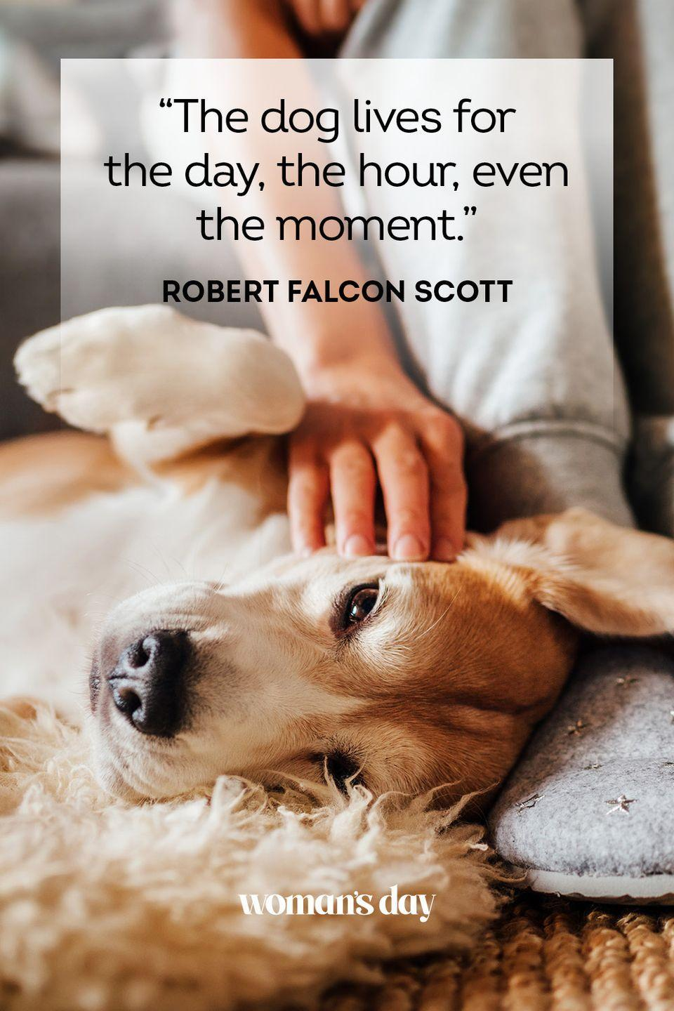 """<p>""""The dog lives for the day, the hour, even the moment."""" </p>"""