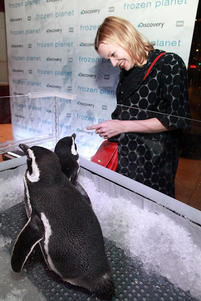 """NEW YORK, NY - MARCH 08:  Samantha Mathis looks at SeaWorld penguins Pete and Penny during the after party for the """"Frozen Planet"""" premiere at Alice Tully Hall, Lincoln Center on March 8, 2012 in New York City.  (Photo by Astrid Stawiarz/Getty Images)"""