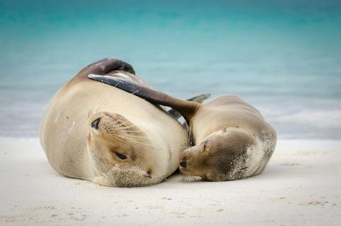 Sea lions in the Galapagos - Credit: Getty