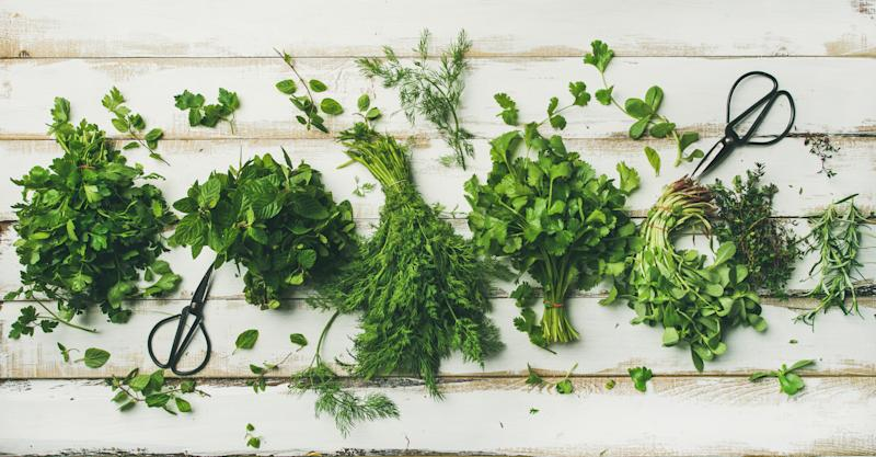 Flat-lay of bunches of various fresh green kitchen herbs.