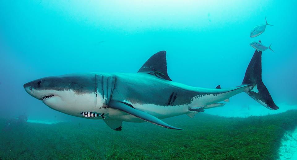 The man has been accused of setting off fake shark alarms. Source: Shark Smart/ Getty