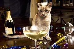 A glass of Meow-lot? Japan launches wine for cats