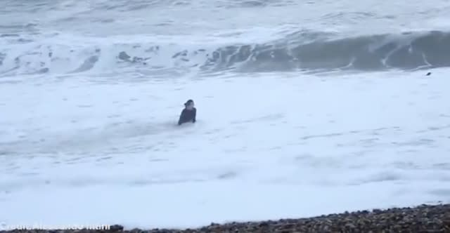 Woman risks life to rescue dog swept out to sea