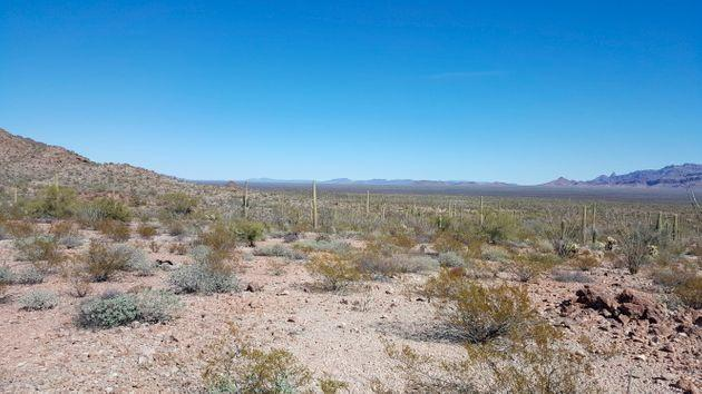 This undated image from Tucson Sector Border Patrol shows the desert terrain close to Arizona's boundary with Mexico near Lukeville, Arizona.