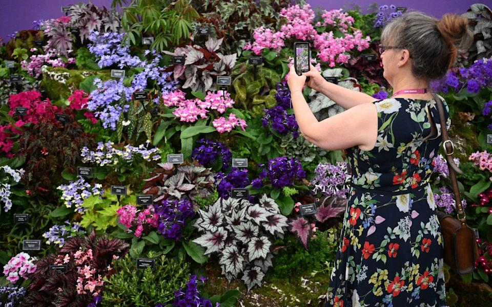 A woman views a floral display at the Chelsea Flower Show. Visitors will be asked to take a lateral flow test before arrival as part of a raft of Covid-19 precautions - Neil Hall/EPA-EFE/Shutterstock