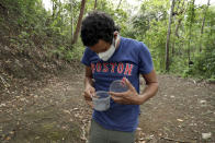 Wearing a mask to curb the spread of the new coronavirus, Dumas Galvez, a researcher of the Smithsonian Tropical Research Institute, looks at ants he collected from a nest in a forest near his home in Paraiso, Panama, Tuesday, April 13, 2021. Galvez outfitted an extra bathroom at his home to hold between 70 and 100 ant colonies. The ants that Galvez studies do not live in colonies as big as others. His largest colonies were around 200 ants, so he estimated he had about 13,000 ants living in his home. (AP Photo/Arnulfo Franco)