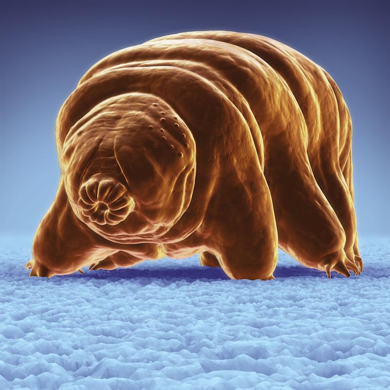 Tempest in a Tardigrade cup: Cute little 'water bears on the moon' don't contaminate space