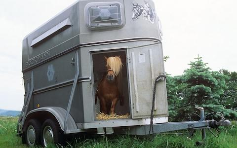 pony in horsebox - Credit: Alamy