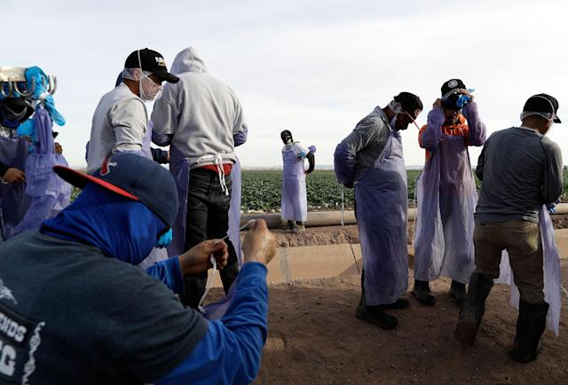 <p>Farmworkers prepare after a break while harvesting cabbage in a field outside of Calexico, Calif., March 6, 2018. (Photo: Gregory Bull/AP) </p>