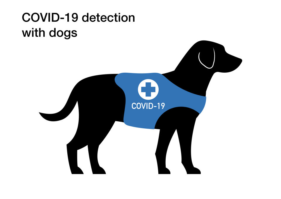 Coronavirus (COVID-19) detection with sniffing dogs