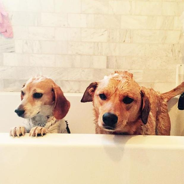 Meaghan Markle's dogs in the bath