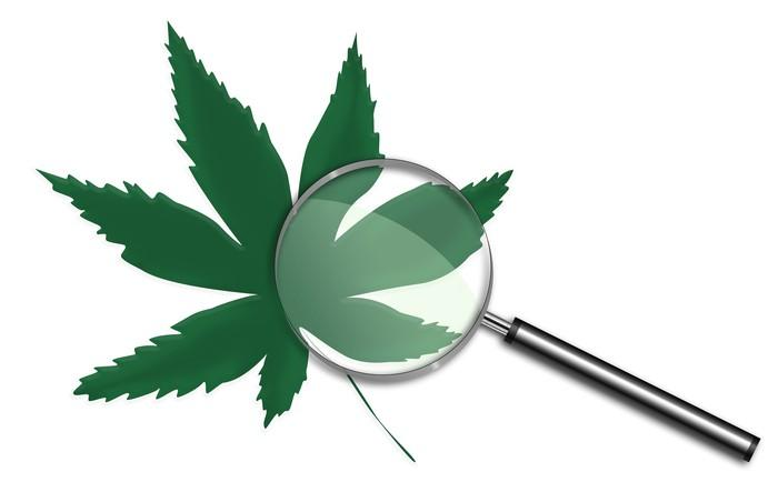 Magnifying glass on top of a cannabis leaf