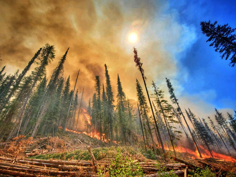 A wildfire burns through forests at the Summit Trail Fire in the Colville Reservation.