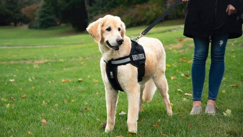 Take your dog with you everywhere you go with this sturdy harness.