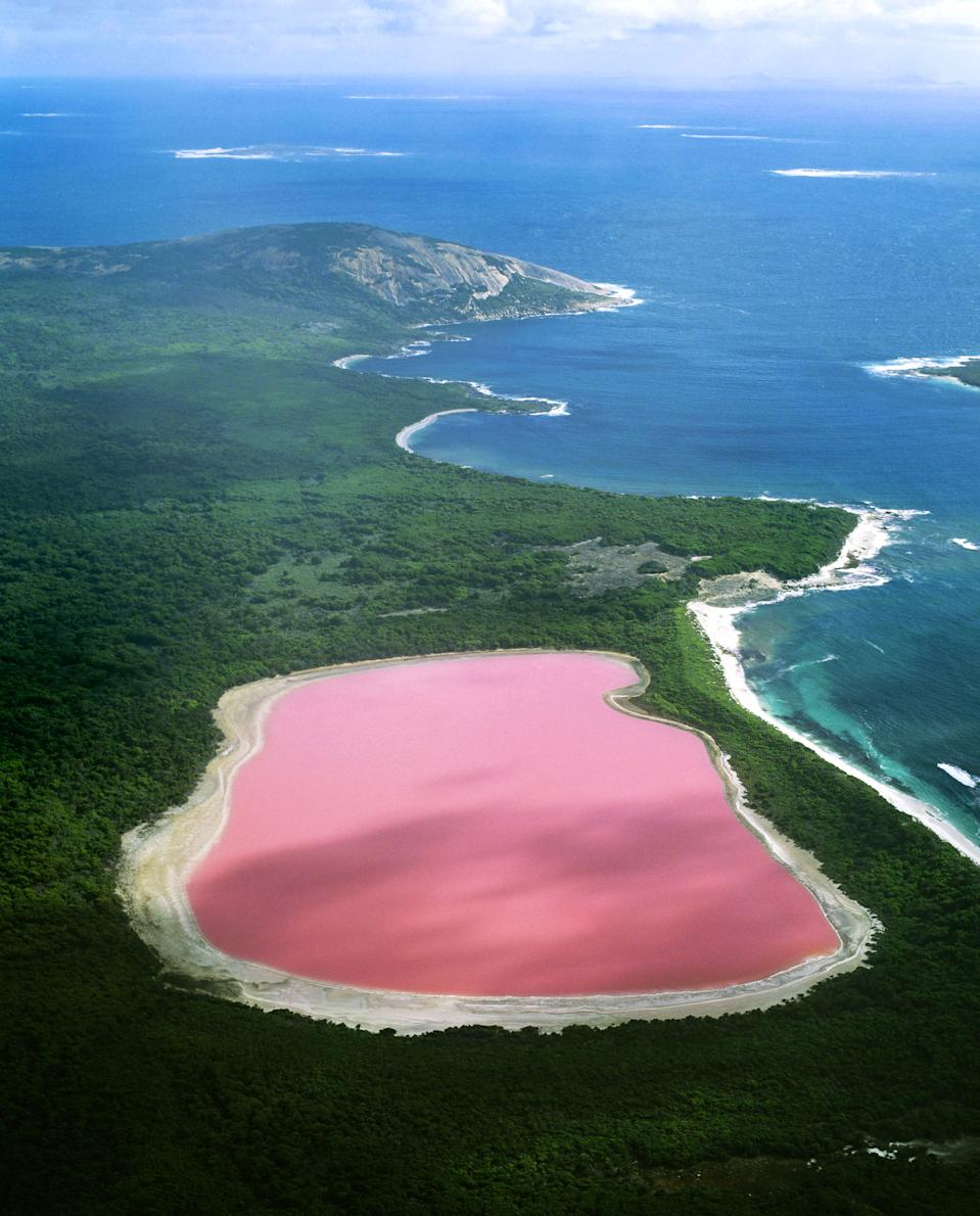 <b>The pink Lake Hiller lake in Western Australia</b> - Scientists have proven the strange pink color is due to the presence of algae which is usually the cause of strange coloration. (Jean Paul Ferrero/Ardea/Caters News)
