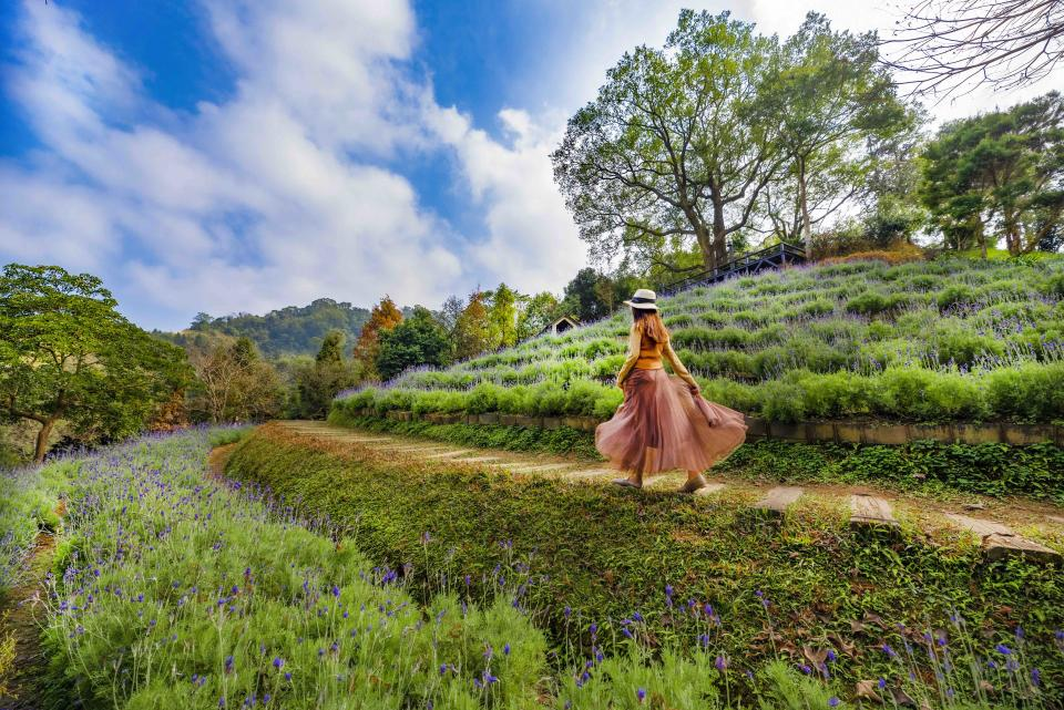 <p>漫步紫色花田享受芬芳|Tourists can stroll through the lavender fields while bathing in the sun with the earthy floral scents. (Courtesy of molly888666)</p>
