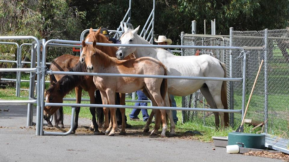 More than 100 animals have been found suffering from severe neglect at a WA riding school.